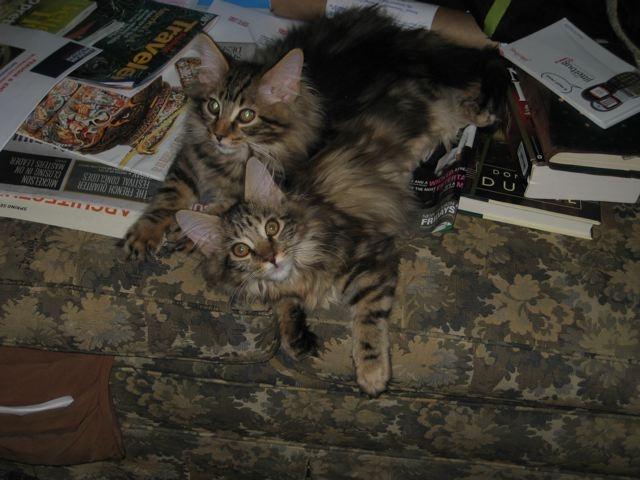 Indra's Net Frieda and Deigo